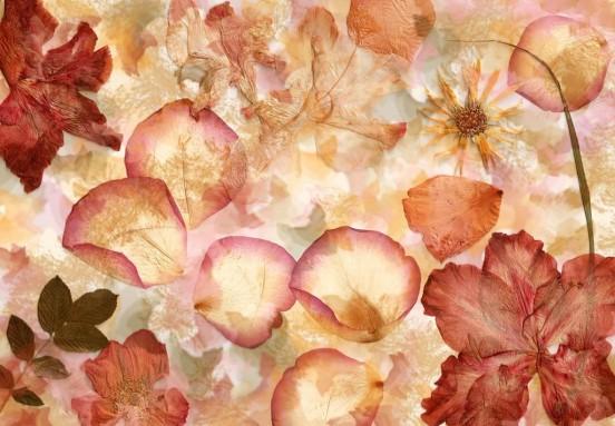 Wizzard and Genius Fotobehang Dried Flowers