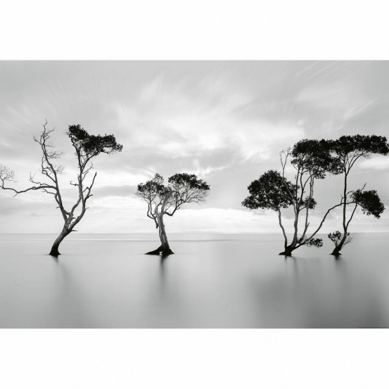Wizzard and Genius Fotobehang Trees in still water