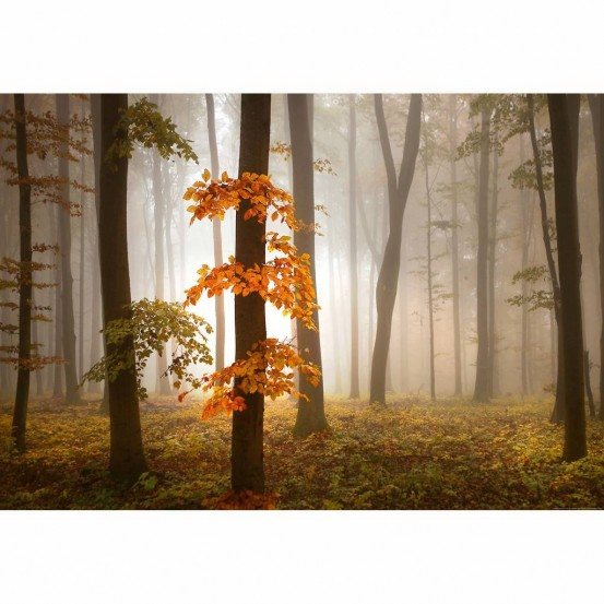 Wizzard and Genius Fotobehang Foggy Autumn Forest