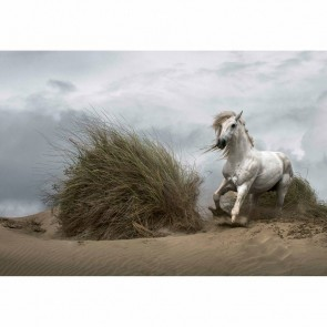 Wizzard and Genius Fotobehang White wild horse