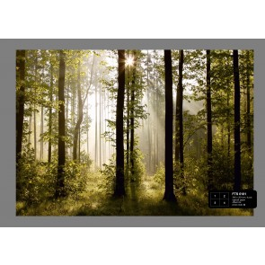 Morning Forest Fotobehang 4D (AG Design)