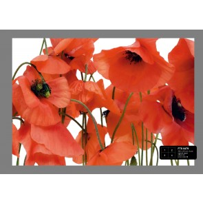 Wild Poppies Fotobehang 4D (AG Design)